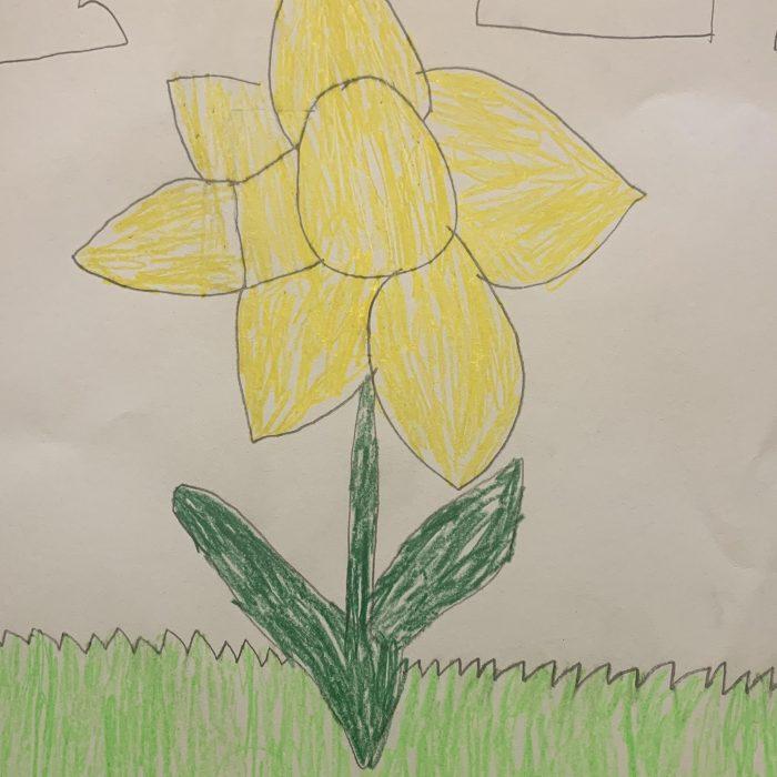 Jack's daffodil